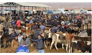İthal et, hayvan satışlarını durdurdu