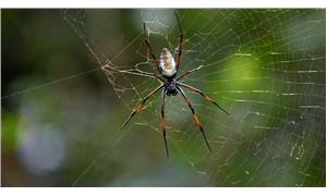 Uykuda örümcek yuttuğumuz iddiası şehir efsanesi çıktı