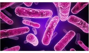 Bilim insanları bakteriyi kayıt cihazına dönüştürdü
