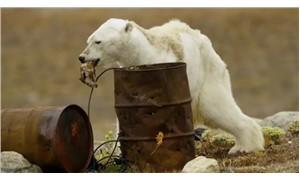 Kutup ayısının açlıktan ölmeden önceki görüntüleri dünya gündemine oturdu