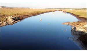 Denizi karartan kirliliğin sebebi hâlâ bulunamadı