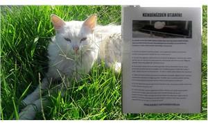Şikayet edilen kedi için astığı ilan büyük takdir topladı
