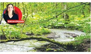 Yerleşim yeri için orman talanı!