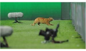 Beşiktaş - Bayern Münih maçında sahaya giren kedi gündem oldu