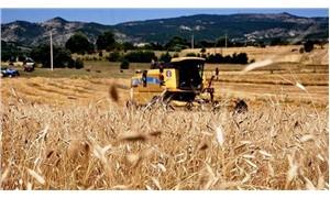 Buğdayda üretim alanı daralıyor