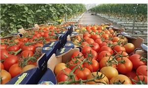 Rusya, 5 Türk şirketine daha domates yasağını kaldırıyor