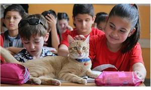 Okul kedisi 'Tombi' kitap kahramanı oldu