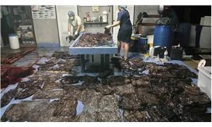 Balinanın midesinden 80 tane plastik poşet çıktı