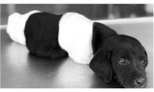 Sapanca Cumhuriyet Başsavcılığı yavru köpekle ilgili soruşturma başlattı