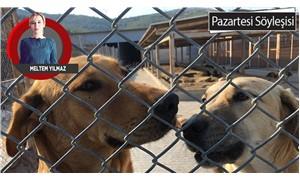 Hayvanları koruma şovları yalan çıktı: Yeni yasa belediyelere katliam yetkisi veriyor