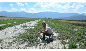 Sağanak yağış tarım arazilerine zarar verdi