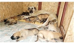 15 yavruya annelik yapan Leydi yardım bekliyor