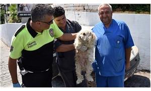 Otomobilde aç, susuz ve havasız bırakılan köpeği polis kurtardı