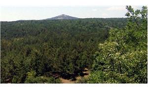 Ormanlar maden atıklarına feda edilecek