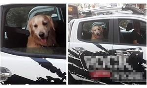 Köpeğine emniyet kemeri takan şoför takdir topladı