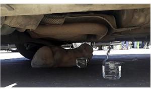 Minibüsün motoruna giren kedi, 50 kilometre yolculuk yaptı