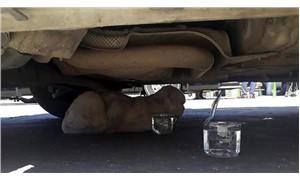"""Minibüsün motorunda 80 kilometre giden kedinin sahibi konuştu: """"Yaşaması mucize"""""""