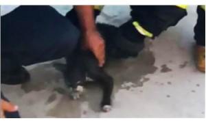 İtfaiyeciler kediyi masajla yaşama döndürdü