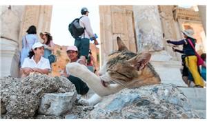 Antik kent kedilere yuva oldu