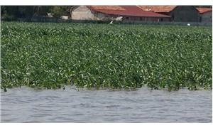 Bafra Ovası'nda tarım arazileri su altında