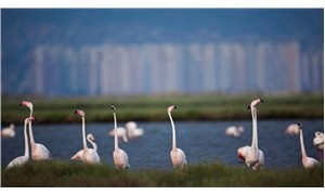 AKP İzmir İl Başkanı: Bunların derdi flamingolar ya da çevre değil
