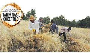 Nüfus ikiye katlandı buğday yerinde saydı