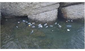 Günübirlikçiler Kilimli Koyu'nu çöp içinde bıraktı