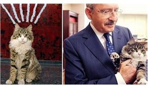 Sabah: CHP'nin kedisi mahalle baskısı yapıyor