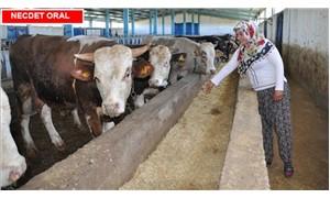 Hayvan ithalatı  sağlığa zararlı