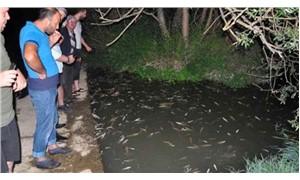 İnegöl Hasanpaşa Deresi'nde 'toplu balık ölümü'