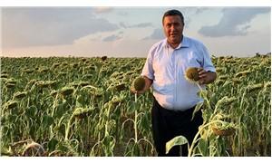 CHP'li Gürer: Çin ürünü ayçiçeği, Aksaraylı üreticilerin kabusu