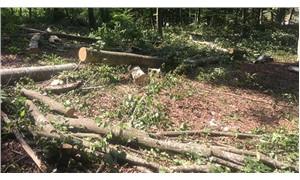 Mezarlık için ağaç katliamına 'dur' dendi