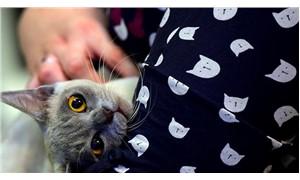 Edirne'de, vali yardımcıları arasındaki 'kedi bakma' tartışması mahkemeye taşındı