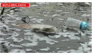 Dereden ölü balık akıyor