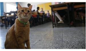 Tombi, okula geri döndü