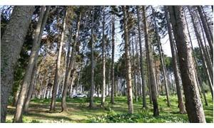 Atatürk Köşkü Ormanı'ndaki ağaçların neden kuruduğu belli oldu