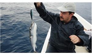 Uzmanlardan Akdeniz'de 'balon balığı' uyarısı