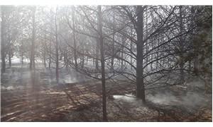 Atatürk Üniversitesi yerleşkesinde yangın