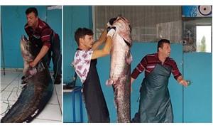 İznik Gölü'nde 2 metrelik yayın balığı yakalandı