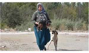 Rukiye Bağcı, 15 yıldır sokak hayvanlarını besliyor