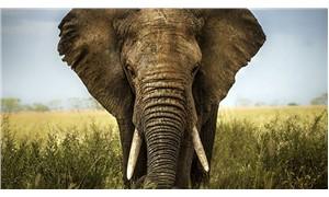 Filler, avcılık yapan 19 kişiyi öldürdü