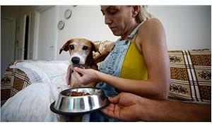 Vurulan sokak köpeği, vücudundaki 126 saçmayla yaşıyor