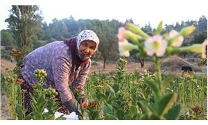 Tarımın yükü de kadınların sırtında