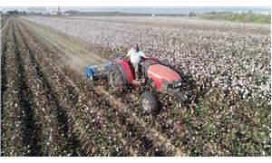 Pamuk üreticisi zor durumda: Verimlilik düştü maliyet arttı