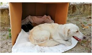 Köpek ve 4 yavrusu, beton su borusu kırılarak kurtarıldı