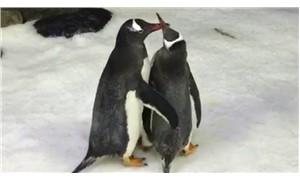 Eşcinsel penguen çift bebek sahibi oldu