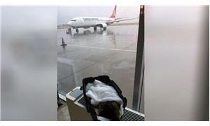 Tedavi için İstanbul'a gönderilmek istenmişti; uçağa alınmayan köpek yaşamını yitirdi