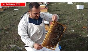 Arıların ve balın korunması için kooperatifler gerekiyor