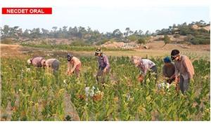 Tarımda üretim düşüyor çiftçi tarımdan kopuyor