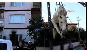 'Yaşlı' diye dereye atılan at kurtarıldı